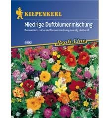 Mélange de plantes basses à fleurs odorantes
