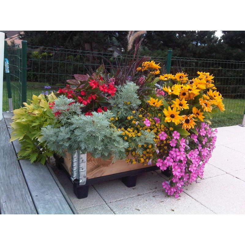 Association d'espèces florales