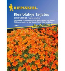 Tagetes tenuifolia 'Luna Orange'