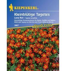 Tagetes tenuifolia 'Luna Rot' rouge