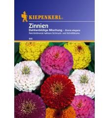Zinnia à fleurs de Dahlias en mélange