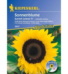 Tournesol Sunrich Lemon