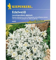 Edelweiss, blanc argenté