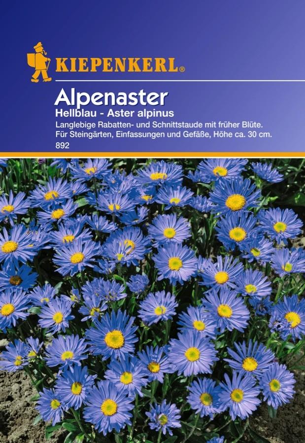Fleur Aster Alpinus Vivace Alpine Melange 50 Graines