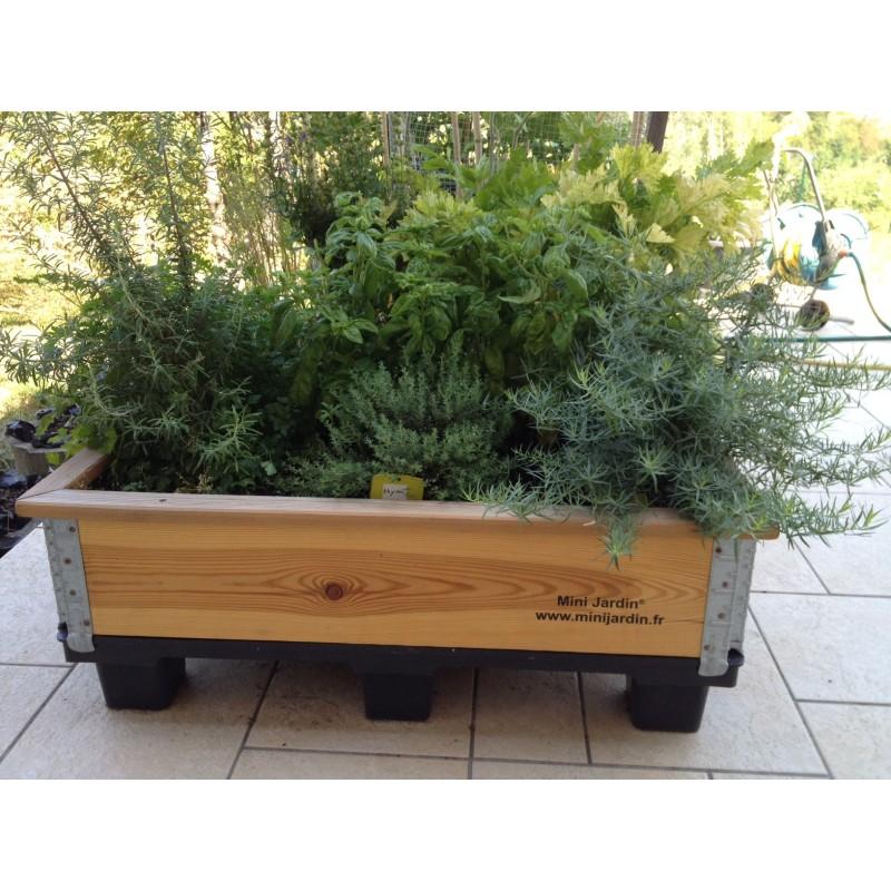 Mini Jardin L - Assortiment d'aromatiques