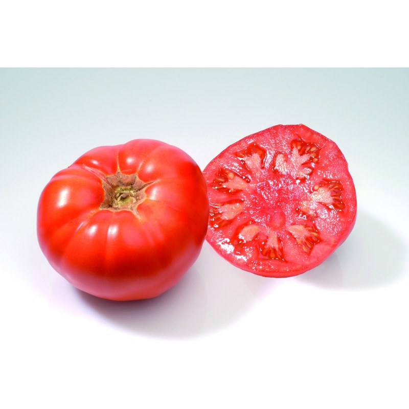 Tomate gros fruit Marmande