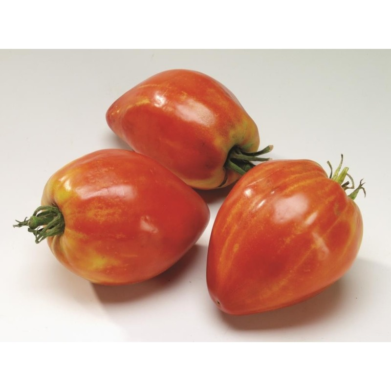 Tomate Coeur de Boeuf (Cuor di Bue)