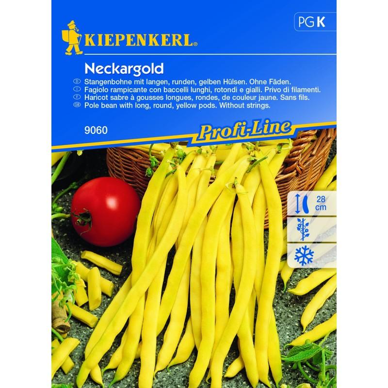 Haricot à rames Or du Neckar (Neckargold)