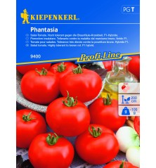 Tomate F1 ronde Phantasia