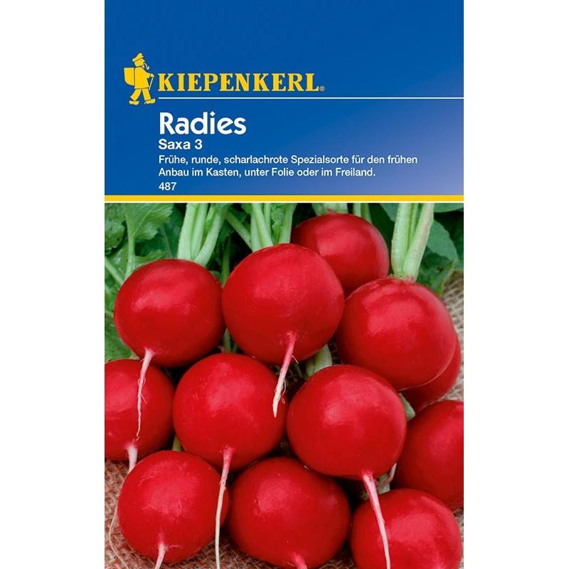 Radis Saxa 3