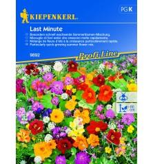 Mélange de fleurs Dernière minute