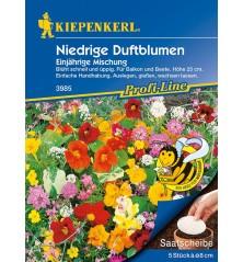 Mélange de plantes basses à fleurs odorantes, disques présemés