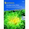 Chicorée scarole ou frisée Breedblad Volhart Winter (Ronde verte à cœur plein)