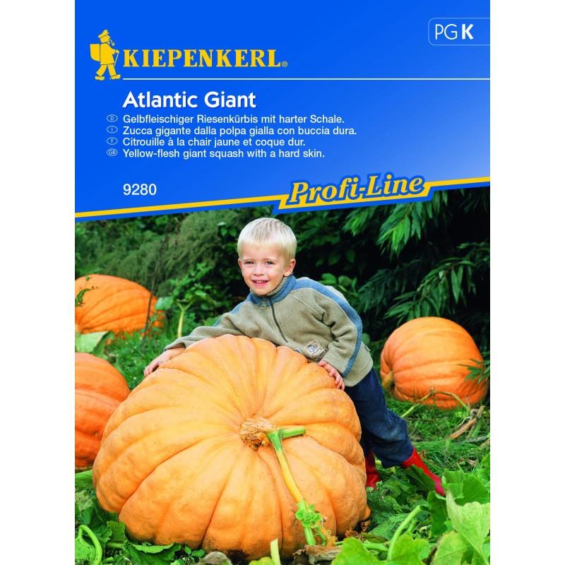 Potiron Atlantic Giant